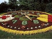 195017