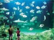 Marine Life at SEA LIFE Sydney Aquarium