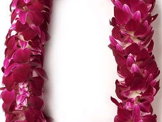 Honolulu airport traditional welcome flower lei greeting oahu tours deluxe lei m4hsunfo