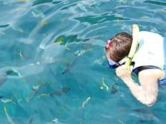 ジェリーフィッシュレイク+ミルキーウェイ+無人島ビーチでシュノーケル 1日ツアー <昼食/送迎付き>...