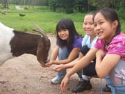 children hand feeding a goat in Australia