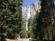 Yosemite / Yosemite Fall