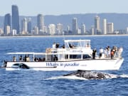 tourists aboard cruise ship taking photos of whale