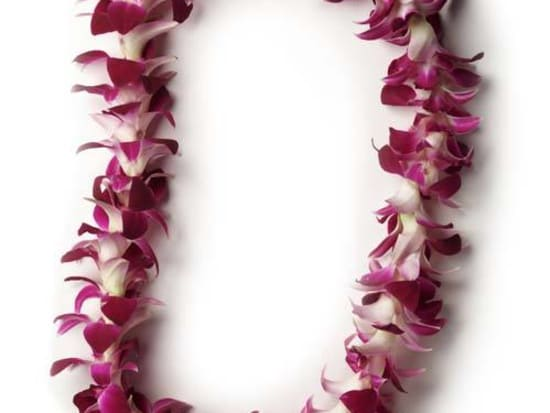 Honolulu airport traditional welcome flower lei greeting oahu tours the beautiful standard lei available for greeting m4hsunfo