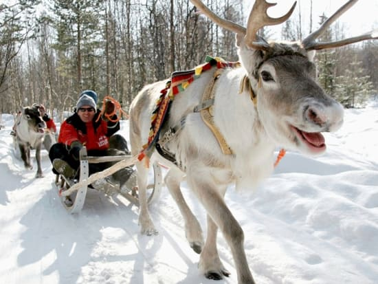 reindeer farm and sled ride from rovaniemi rovaniemi tours