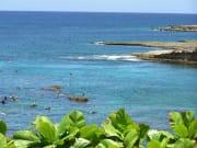 Hawaii_Oahu_Surf Bus_sharks