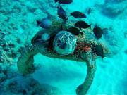 turtle4
