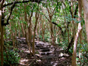 Hawaii_Rainforest_01