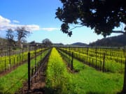 Wine Country Vines
