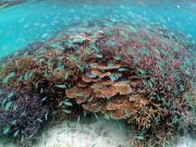 サンゴ (13)