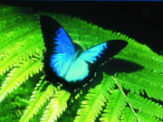 Australian Butterfly Sanctuary Ticket