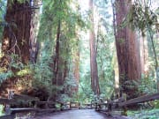 Muir Woods Natural Trail