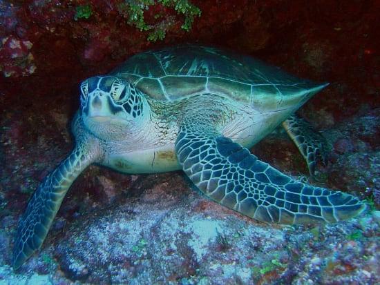 Turtle3_NA