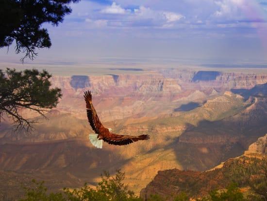 las-02a-grand-canyon-west-rim-eagle-flying -2