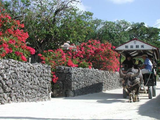 竹富水牛車