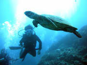 Diver with coral reef and sea turtle