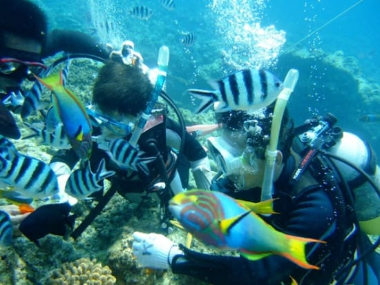 Kid friendly diving in Okinawa