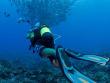 10-Fakarava-Diving-CopyrightSylvainGirardeau