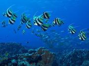 08-Fakarava-Diving-CopyrightEricCheng