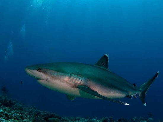 09-requin-tapete-photo-V.Truchet