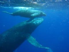 whale_05