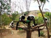 20131108071540_89996_Lemurs_Park_(2)
