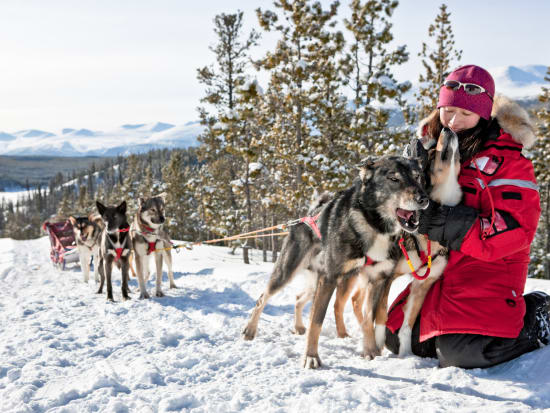 ara_dogsledding_20090303131253 _1_