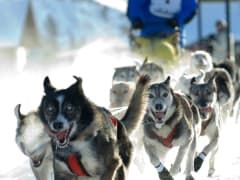 ara_dogsledding_20070211041113