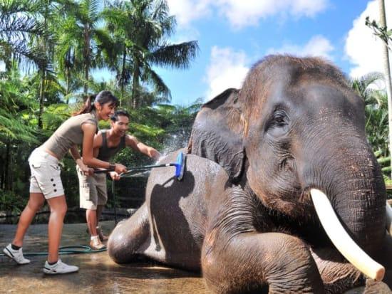 ELEPHANT WASHING ACT