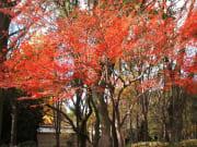 20131215183037_104427_大阪城公園2