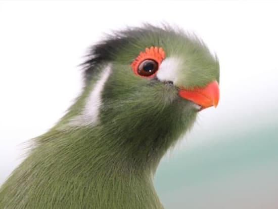 birds_fish_0