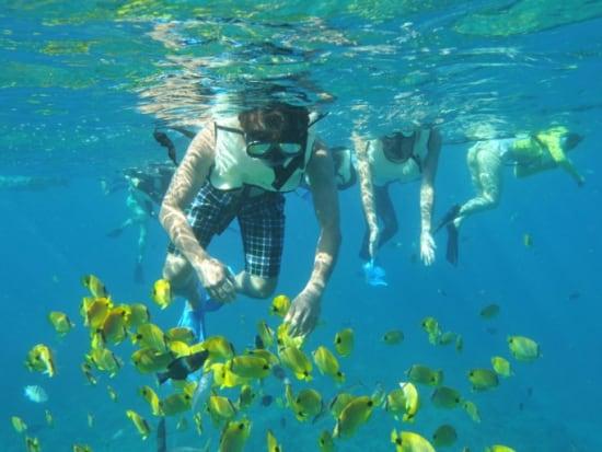 snorkelfish