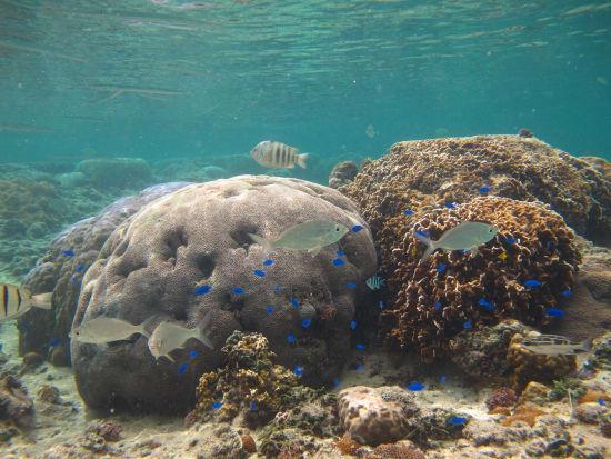 珊瑚スノーケル&トレッキング