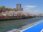 ⑮アクアライナーより桜 造幣局