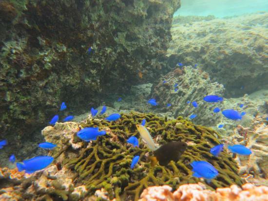 珊瑚スノーケル&トレッキング (10)