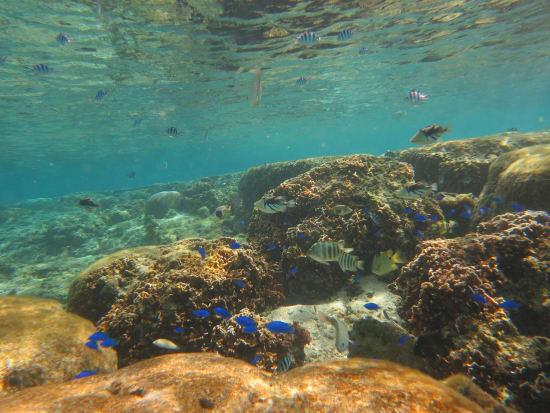 珊瑚スノーケル&トレッキング (6)