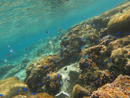 珊瑚スノーケル&トレッキング (8)