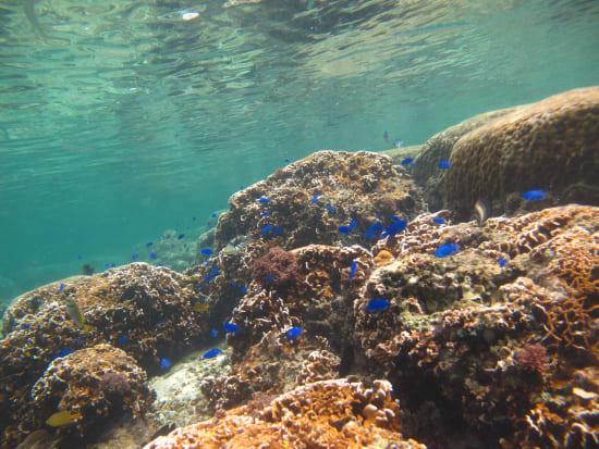 珊瑚スノーケル&トレッキング (24)