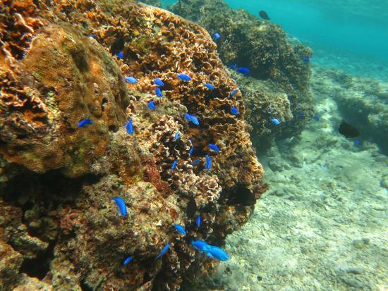 珊瑚スノーケル&トレッキング (5)