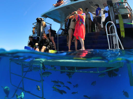 Reef Cruise (11)