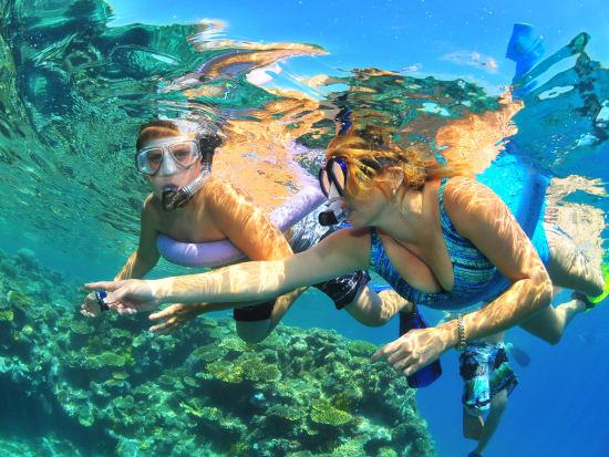Reef Cruise (2)