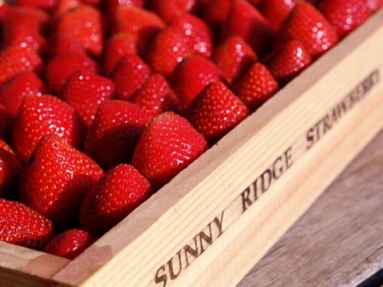 Sunny Ridge Strawberries (348, 348S)