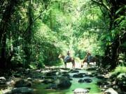 Rainforest Tour (22)