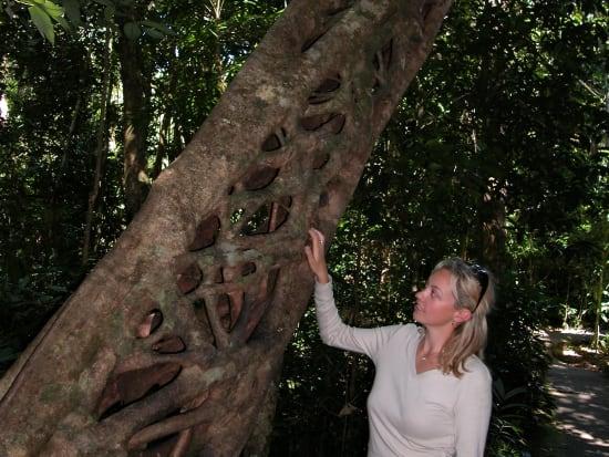 Rainforest Tour (14)