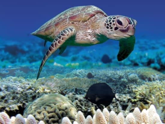 Turtle_Norman_Reef