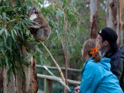 Koala Conservation Centre (384, 324, 387, 322P)