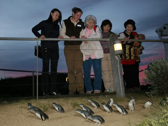 Penguin Parade 2 (ANY PP TOUR)
