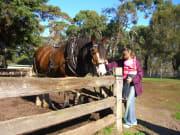 Churchill Island - Horses (376, 366, 366S)