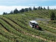 USA_California_Sonoma Wine Country Tour