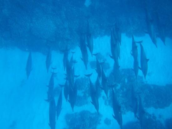 イルカ24(海底を泳ぐ)